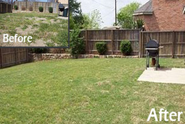 drought tolerant lawn wylie tx